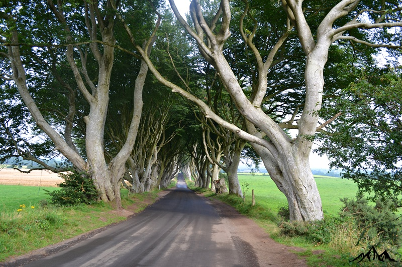 The Dark Hedges/Game of Thrones