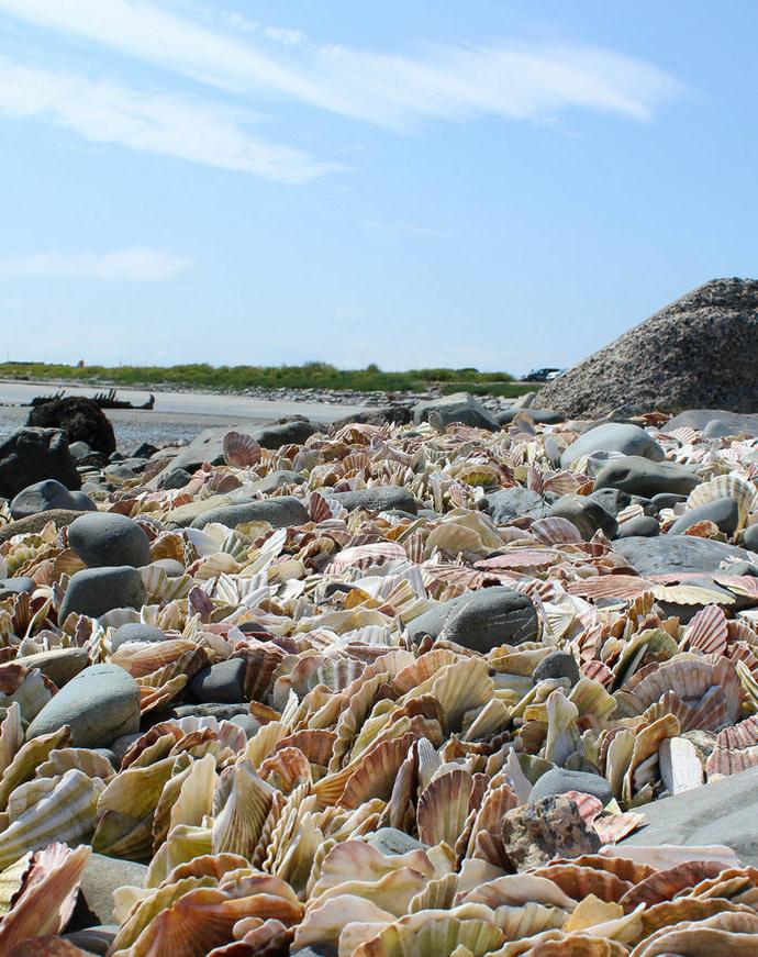 Portavogie Bay Beach